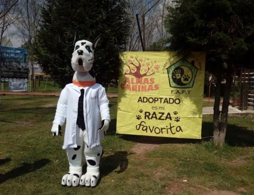 5ta Feria de adopciones con la fundación Amigos Peludos y Almas Caninas