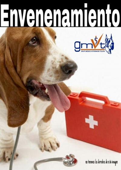GMVT-Envenenamiento