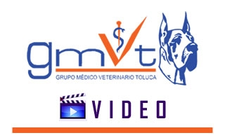 GMVT-Videoicon