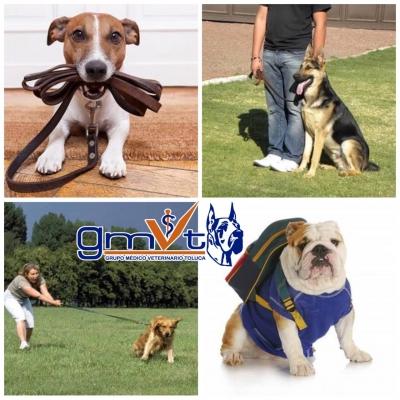 GMVT-mascota-a01