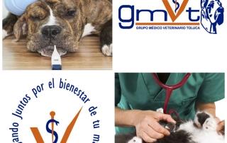 consultas-medicoveterinario-gmvt