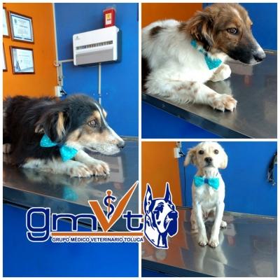 gmvt-adopciones-