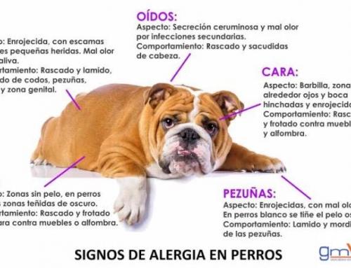 Para la comezón y el malestar de tu mascota causados por alergias.