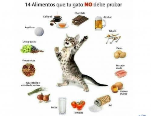 Alimentos que tu gato no debe consumir