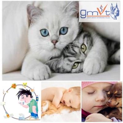 gmvt-asma