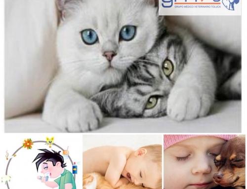 Los gatos ayudan a prevenir el asma en niños pequeños.