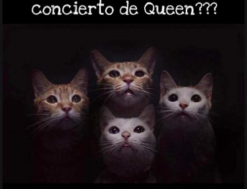 Conciertos nocturnos de nuestros gatitos