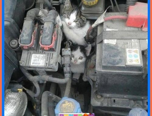 Antes de encender tu auto