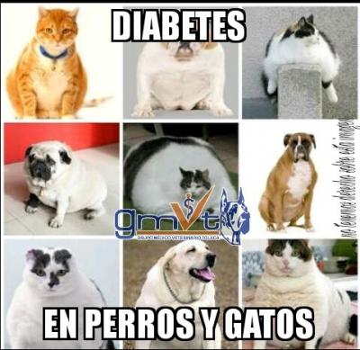 gmvt-dia-diabetes