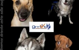 gmvt-discapacidad