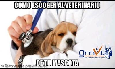 gmvt-elegirmascota