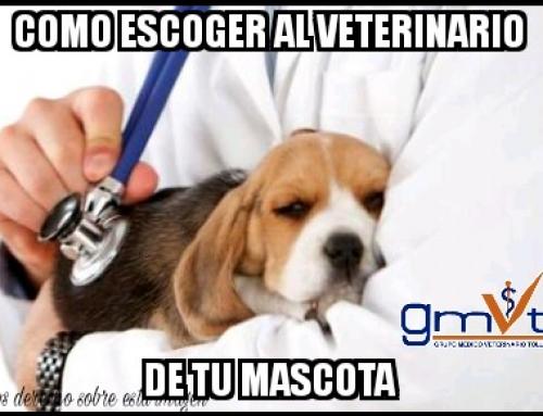 ¿Cómo escoger al veterinario de tu mascota?