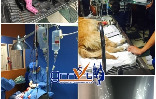 gmvt-emergencia