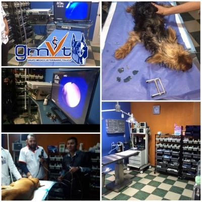 Endoscopía en GMVT