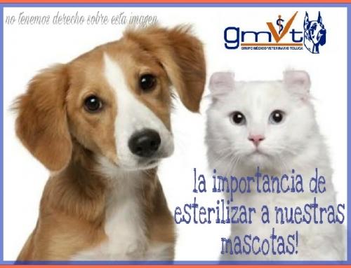 La importancia de esterilizar a nuestra mascota