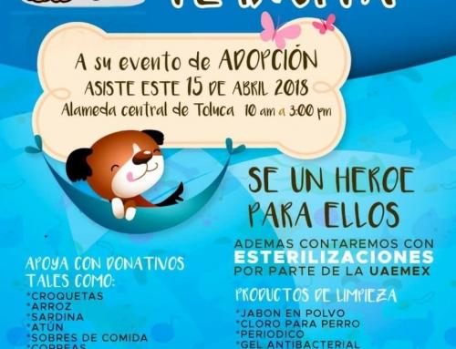 Adopciones caninas Salva una Vida