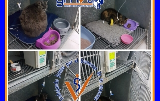 gmvt-gatoscuidados