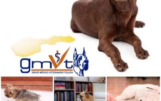 gmvt-mascotasorinanencasa