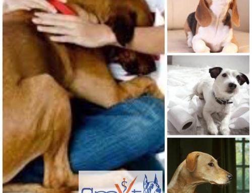 3 pasos para ayudar a tu perro con fobia a las tormentas.