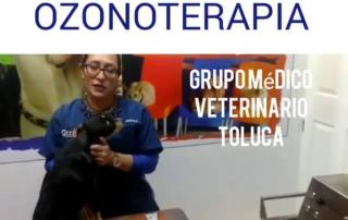 gmvt-ozonoterapiarectal