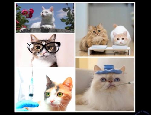 La pregunta del día de hoy – ¿Cuál es el periodo de vida de mi gato?