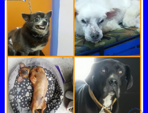 Perros de edad avanzada, geriátricos o viejitos.