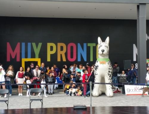 Pet day Julio 2019 en Town Square Metepec