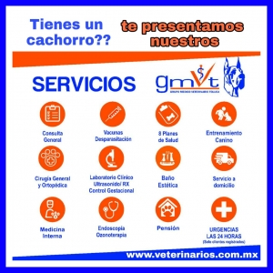 Servicios en GMVT