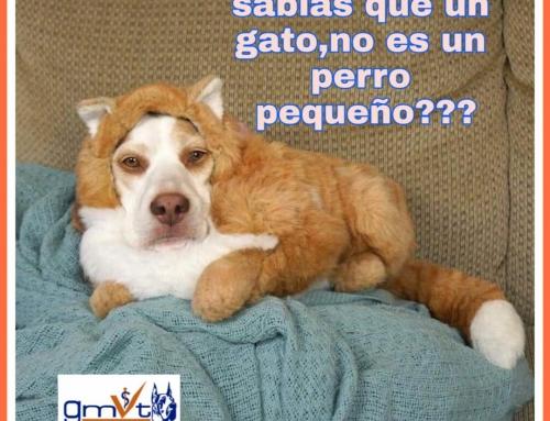 Un gato no es un perro pequeño!!