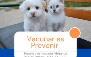 gmvt-vacunaresprevenir