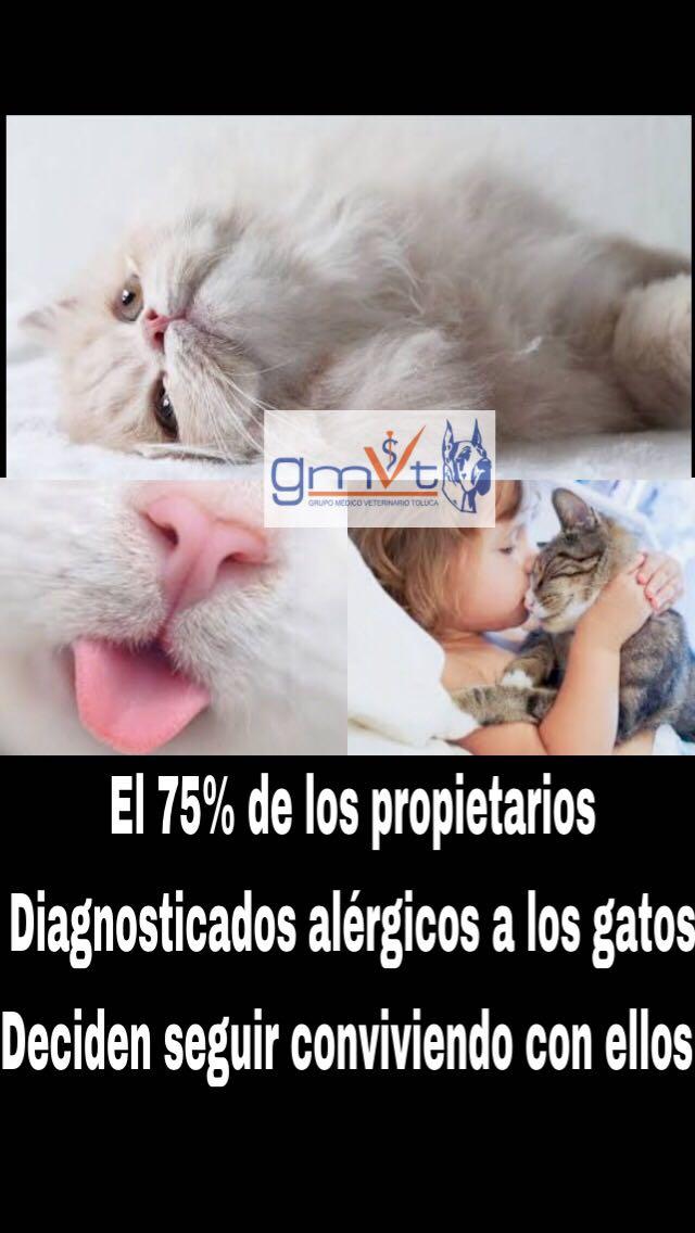 GMVT Veterinarios