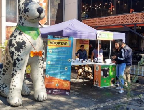 Apoyo en campaña de adopción amigos peludos de Toluca y cervecería Chapultepec.