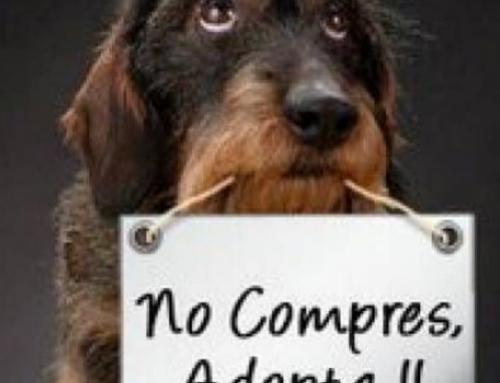 ¿Sabes cuáles son los beneficios de adoptar una mascota?