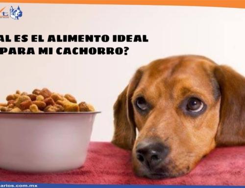 Alimentación de tu cachorro