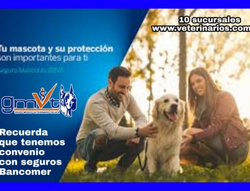 Convenio con Seguros Bancomer
