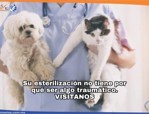 Campañas de esterilización canina y felina