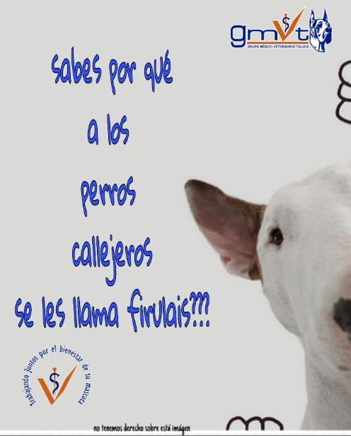 Por Que Se Les Dice A Los Perros Firulais Grupo Medico Veterinario Toluca