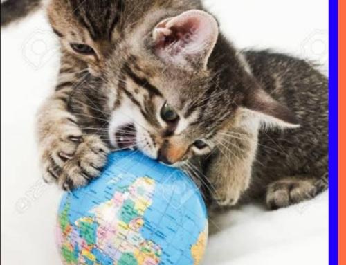 Tener un gato es un mundo diferente…