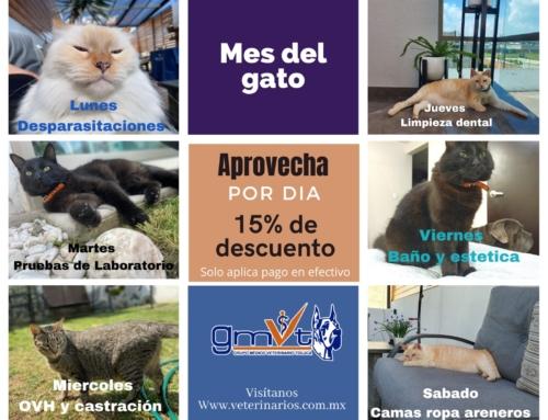 Promoción Agosto 2021 – Mes del gato