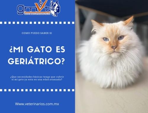 ¿Mi gato es geriátrico?