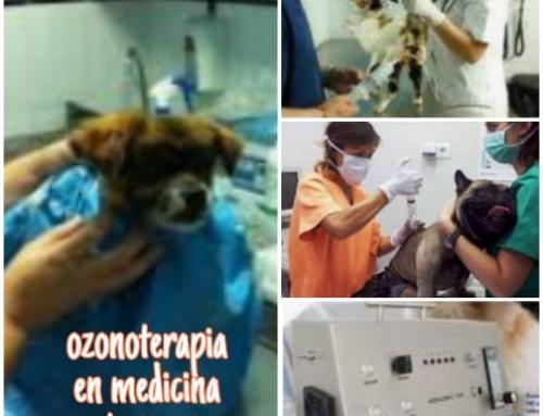 Uso del ozono en la clínica veterinaria
