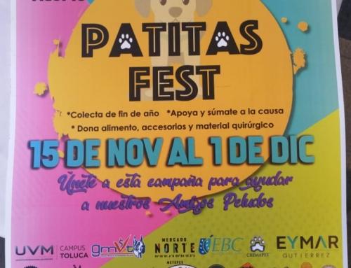 Patitas Fest 15 – Noviembre de 2019 al 1 de Diciembre de 2019