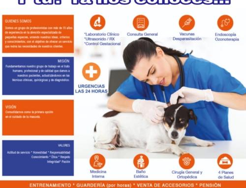 ¿Cómo seleccionar un buen veterinario para tu mascota?