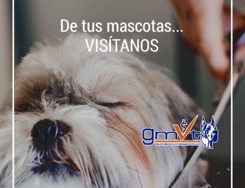 Deten el mal olor de tus mascotas
